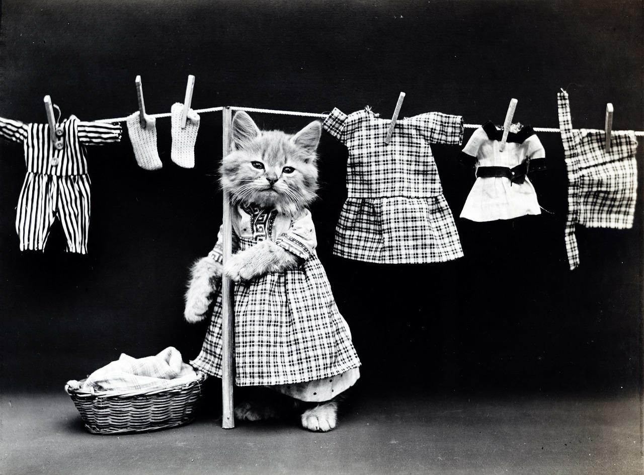 キュプラとポリエステル・レーヨンの違いは?洗濯してシワになるのはどれ?