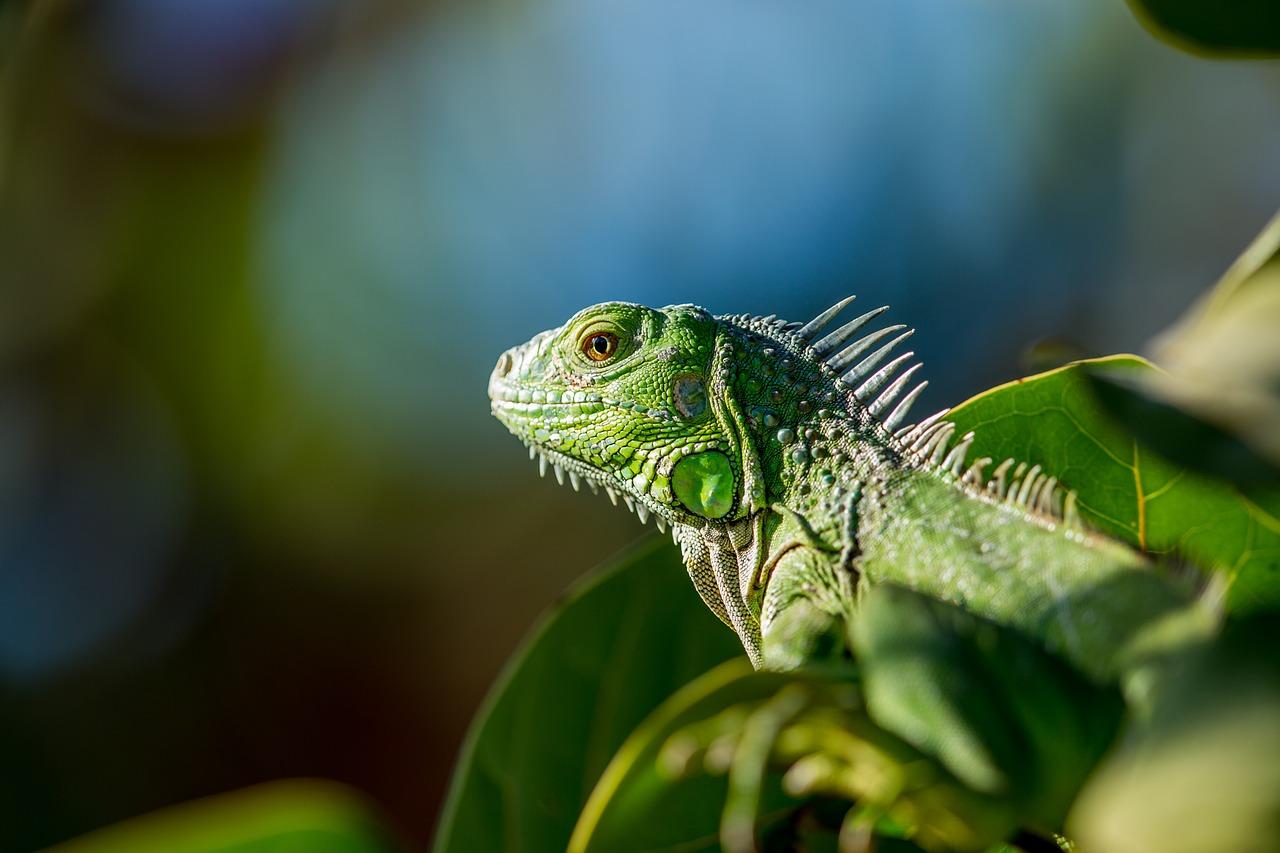 トカゲを飼育する費用は?湿度とレイアウトはどうすれば良い?