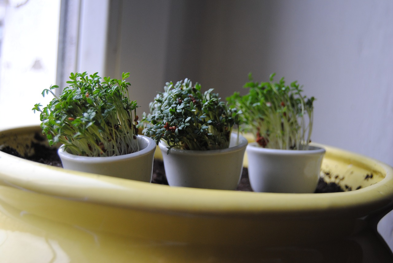 ブロッコリースプラウトの効果的な食べ方は?ダイエットに最適な量と種・根の栄養も確認!