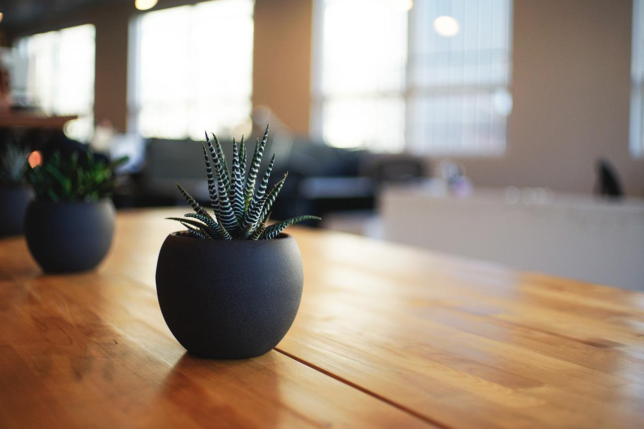 観葉植物が枯れる風水の意味は?悪い気を無くし運気を上げる方法!
