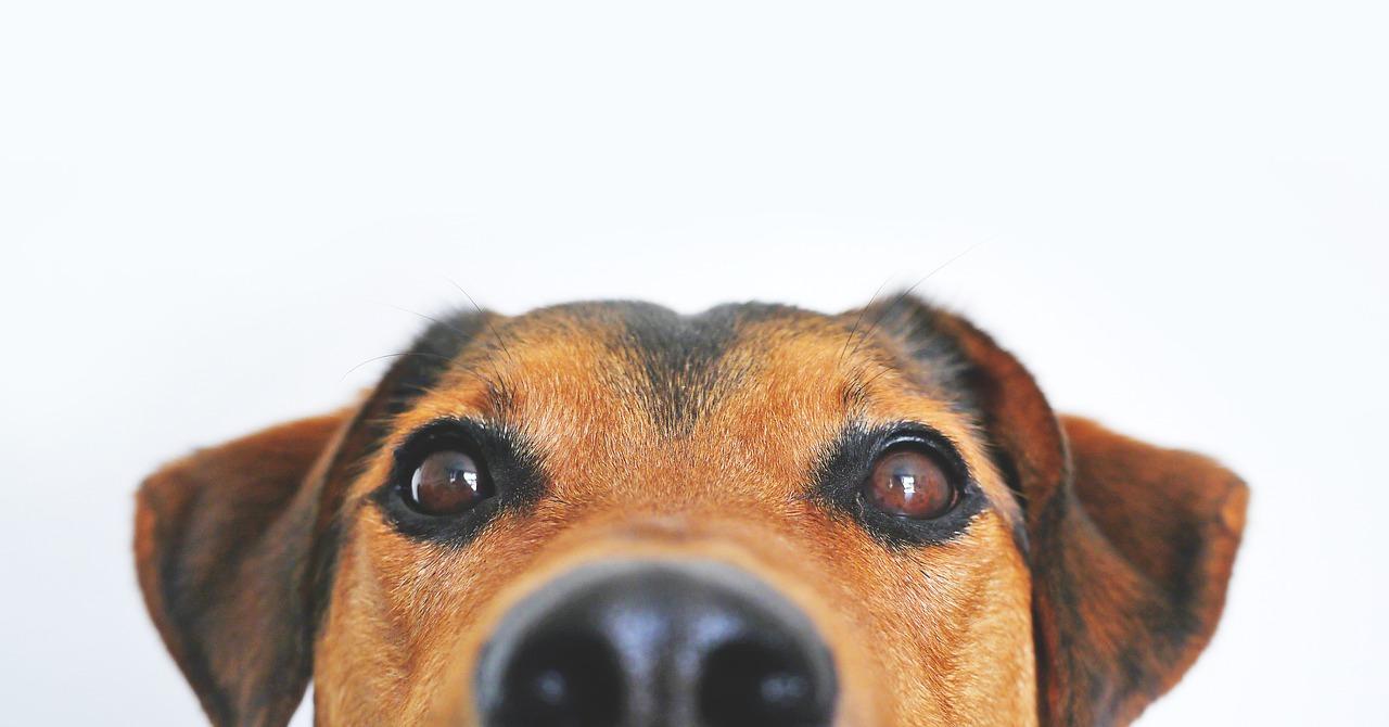 犬の狂犬病ワクチン接種時期や間隔は?予防接種は義務?副作用や散歩・シャンプーは可能かなど紹介!