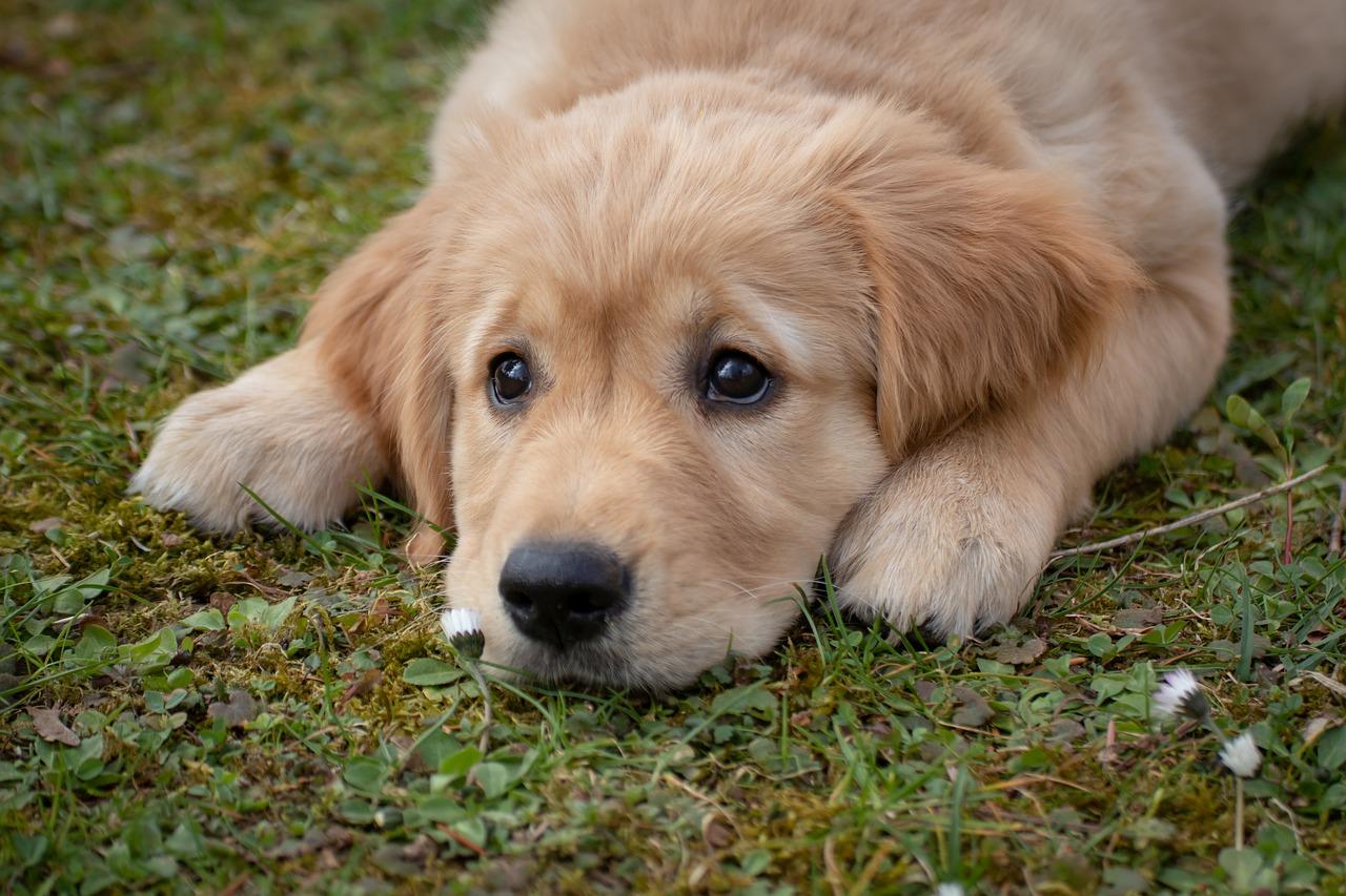 犬の夏バテのサインは?餌を吐く症状は危険?対策グッズやバテない食事法を紹介!