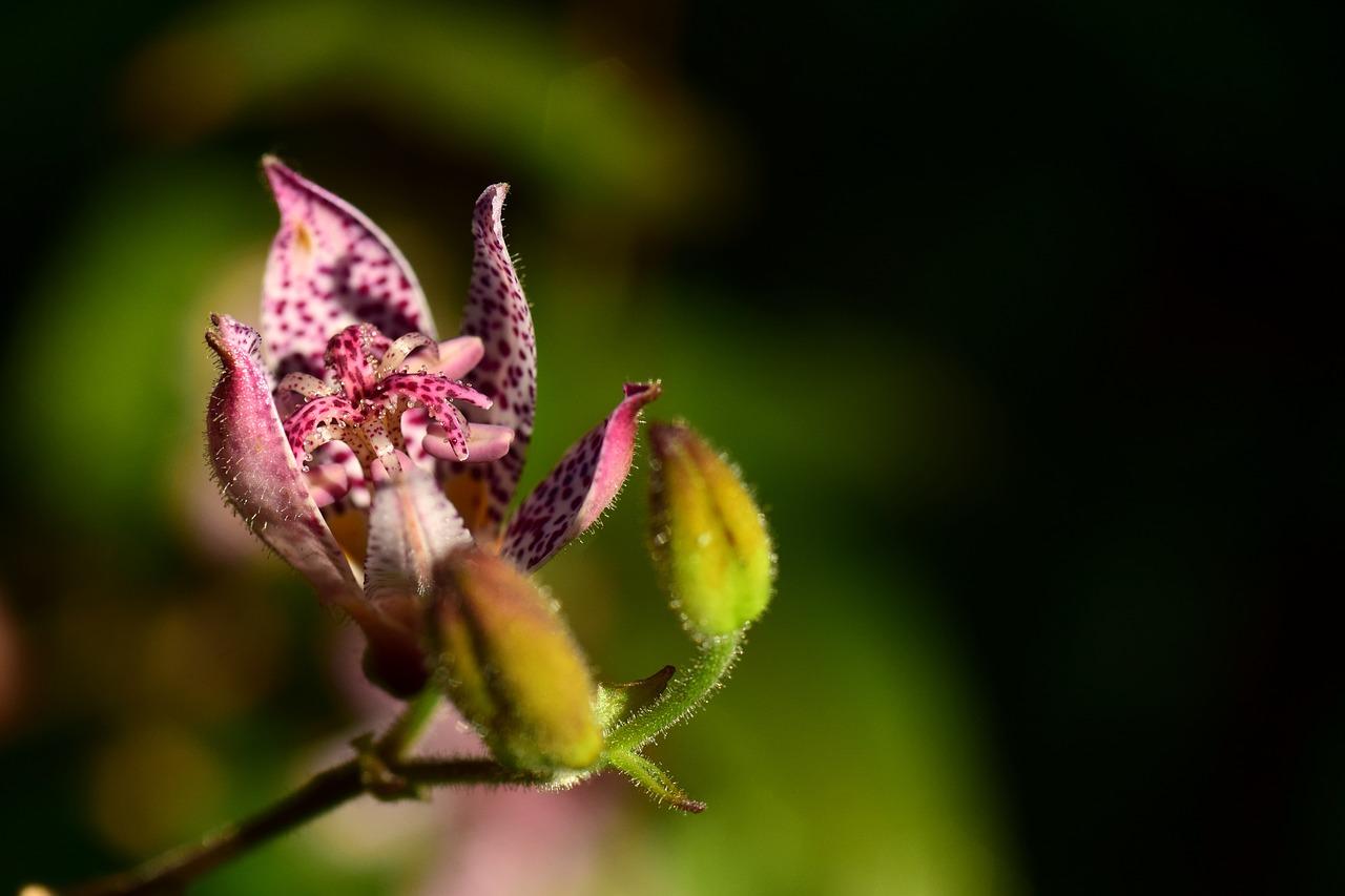 シマトネリコの育て方は鉢植えが良い?プランターを使って室内でも可能?剪定の仕方も紹介!